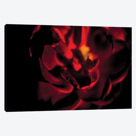 Rad Tea Rose Surrounded By Darkness Canvas Print #NRV129} by Nik Rave Canvas Print