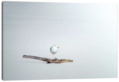 Seagull Sitting On A Log Canvas Art Print