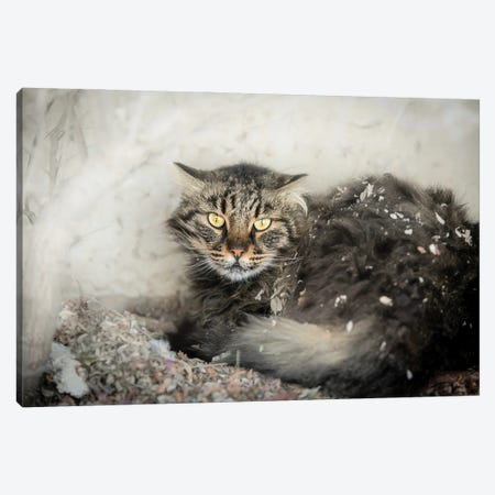 Homeless Cat In A Pile Of Leaves Canvas Print #NRV130} by Nik Rave Canvas Artwork
