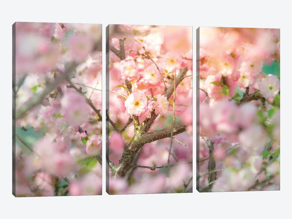 Wild Rose Bush Cream Tones by Nik Rave 3-piece Canvas Wall Art