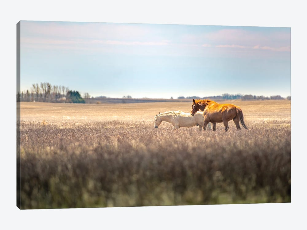Wild Horses At The Field At Evening by Nik Rave 1-piece Canvas Wall Art