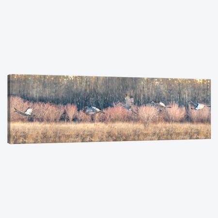 Blue Crane Sequence In Flight Canvas Print #NRV137} by Nik Rave Canvas Art Print