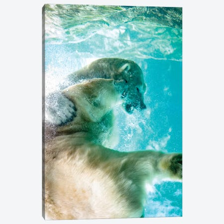 Polar Bears Fighting Underwater Canvas Print #NRV13} by Nik Rave Canvas Print