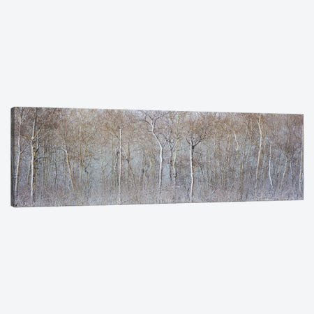 Birchwood Winter Forest Color Panorama Canvas Print #NRV140} by Nik Rave Canvas Print