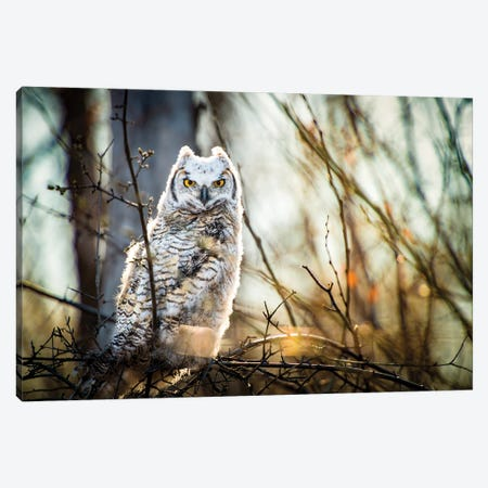 Owl At The Woods Canvas Print #NRV145} by Nik Rave Canvas Artwork