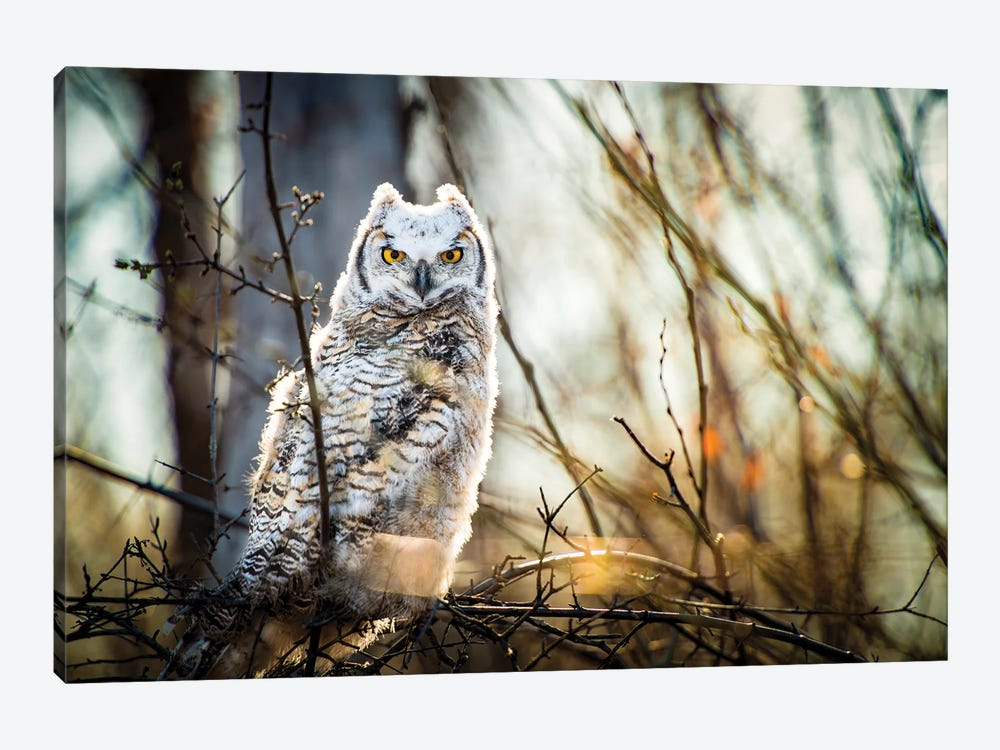 Owl At The Woods by Nik Rave 1-piece Canvas Artwork