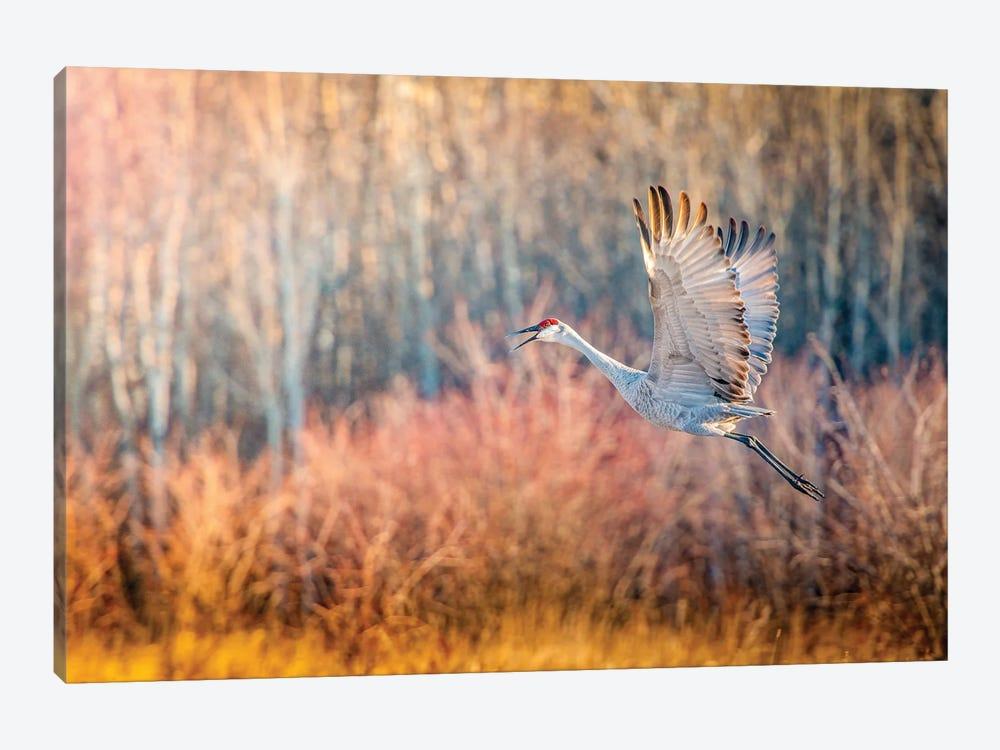 Blue Crane In Flight by Nik Rave 1-piece Art Print