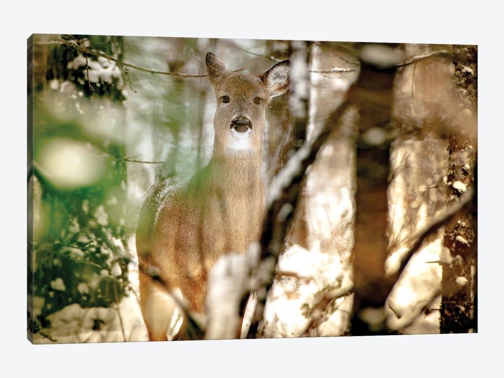 Deer In Between Branches In Winter by Nik Rave 1-piece Canvas Artwork