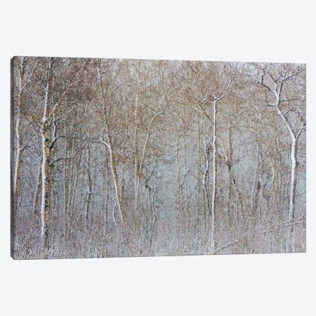 Birchwood Winter Forest Color I Canvas Print #NRV152} by Nik Rave Canvas Wall Art