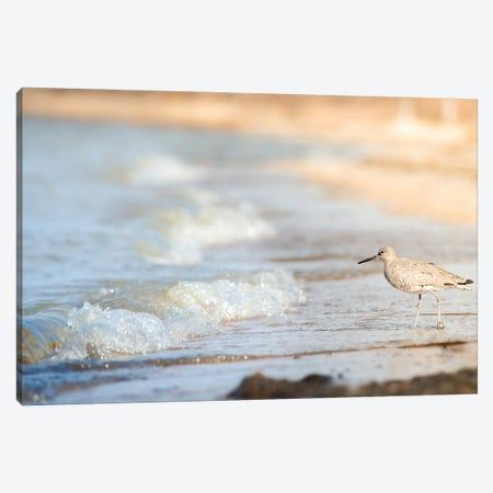 Bird On The Shore Canvas Print #NRV156} by Nik Rave Canvas Art Print