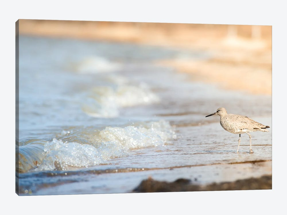 Bird On The Shore by Nik Rave 1-piece Canvas Art