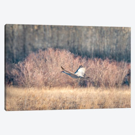 Blue Crane Sequence In Flight I Canvas Print #NRV162} by Nik Rave Canvas Print