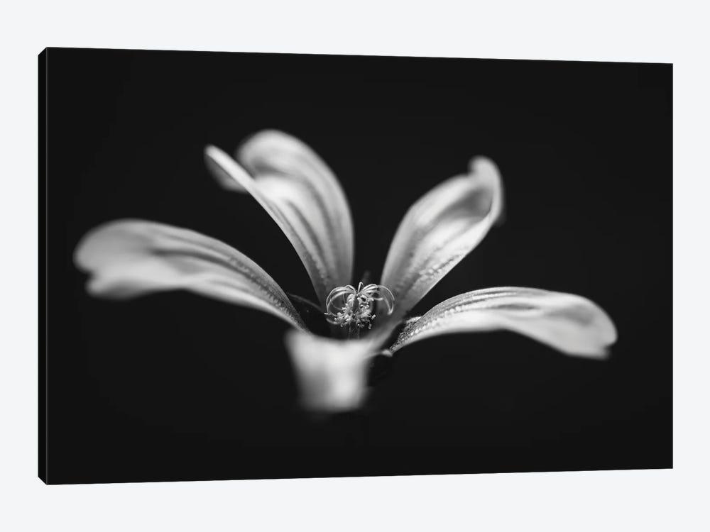 Monochrome Beautiful Flower Dark Graphite Background by Nik Rave 1-piece Canvas Art Print