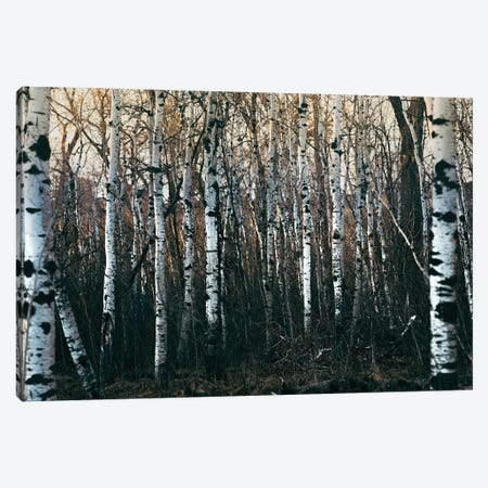 Inside Of Birchwood Forest Canvas Print #NRV167} by Nik Rave Canvas Wall Art