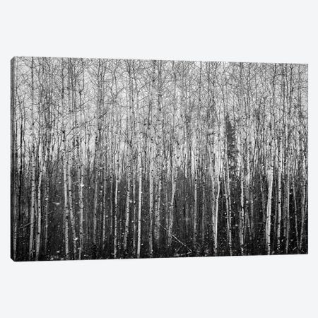Birchwood Forest At The Snowfall Panorama Canvas Print #NRV175} by Nik Rave Canvas Print