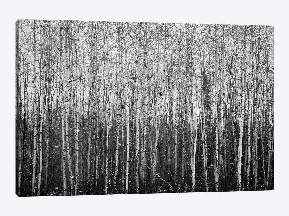 Birchwood Forest At The Snowfall Panorama by Nik Rave 1-piece Canvas Art Print