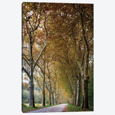 Autumn High Tree Alley Canvas Print #NRV178} by Nik Rave Canvas Art