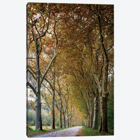 Autumn High Tree Alley Canvas Print #NRV178} by Nik Rave Canvas Art