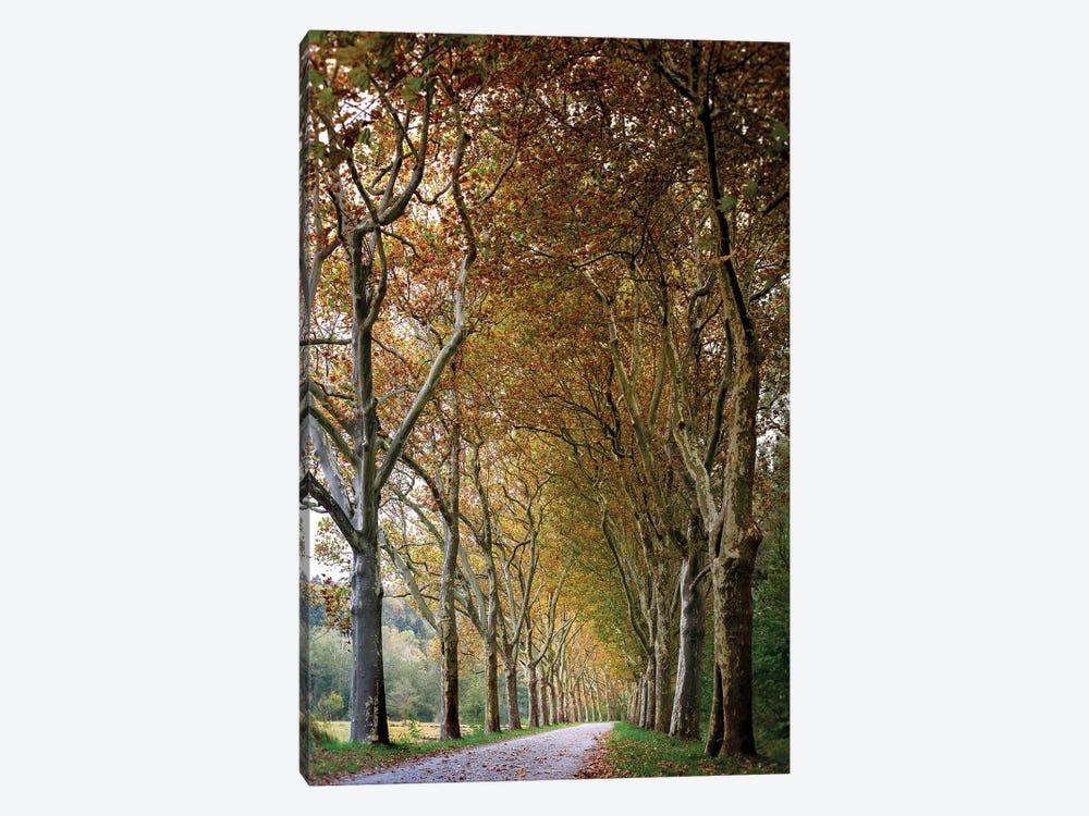 Autumn High Tree Alley by Nik Rave 1-piece Canvas Art