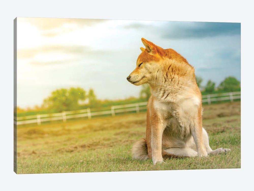 Shiba Dog Enjoying The Sun by Nik Rave 1-piece Canvas Artwork