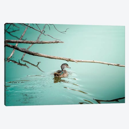 Duck On A Milky Cyan Water Male Canvas Print #NRV18} by Nik Rave Canvas Art Print