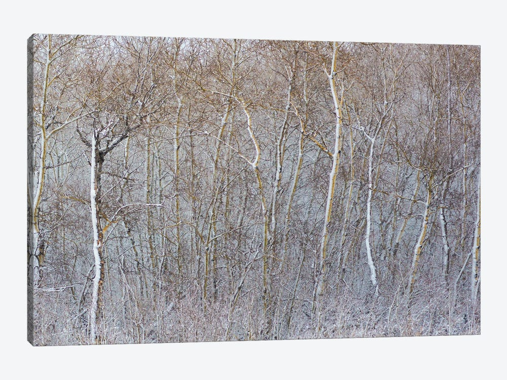 Birchwood Winter Forest Color Right II by Nik Rave 1-piece Canvas Artwork