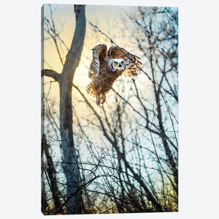 Owl Flying Through The Forest In The Light Of The Sun Canvas Print #NRV195} by Nik Rave Canvas Art Print