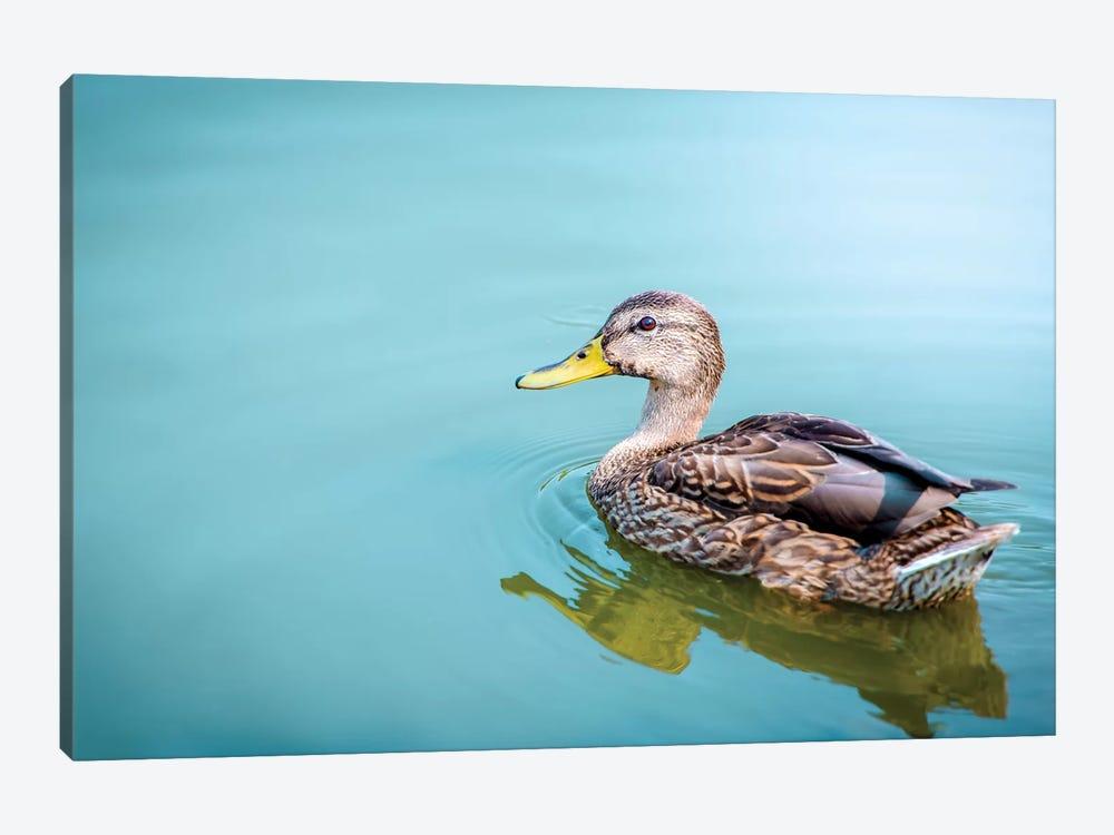 Duck On A Milky Cyan Water Female by Nik Rave 1-piece Canvas Art