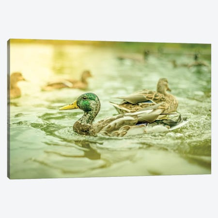 Ducks Pound Dynamic Canvas Print #NRV20} by Nik Rave Canvas Wall Art