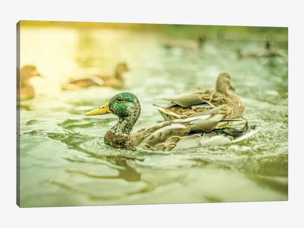 Ducks Pound Dynamic by Nik Rave 1-piece Canvas Art