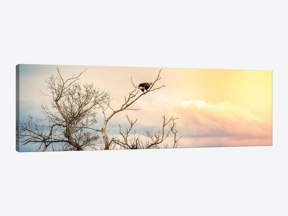 Epic Sky Bald Eagle Sitting On The Branch 1-piece Art Print
