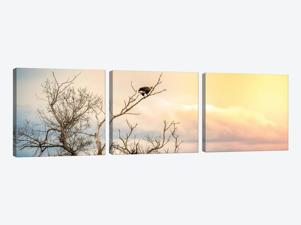 Epic Sky Bald Eagle Sitting On The Branch 3-piece Canvas Print