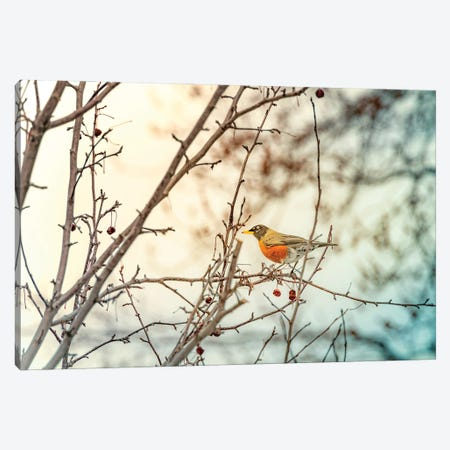 Robin Sitting On Branches Canvas Print #NRV213} by Nik Rave Canvas Print