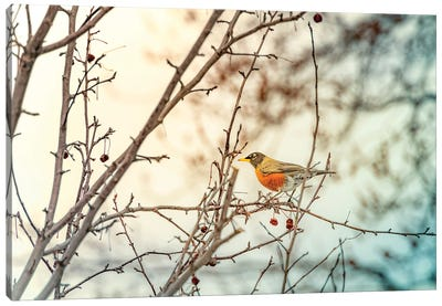 Robin Sitting On Branches Canvas Art Print