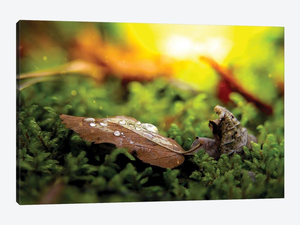 Leaf With Drops Of Water On The Ground by Nik Rave 1-piece Canvas Art Print
