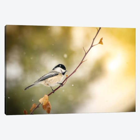 Small Bird On The Bench With A Light Snow Canvas Print #NRV219} by Nik Rave Art Print