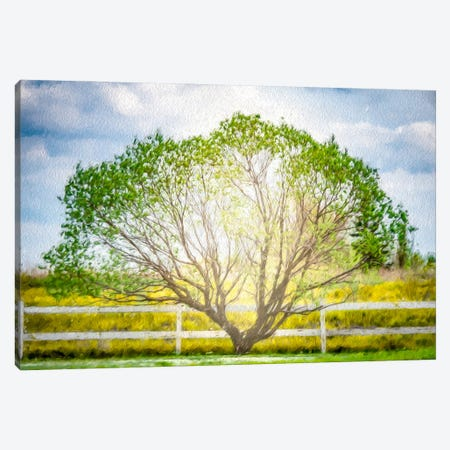 Arc Tree In Light Of The Sun Painting Canvas Print #NRV221} by Nik Rave Canvas Artwork
