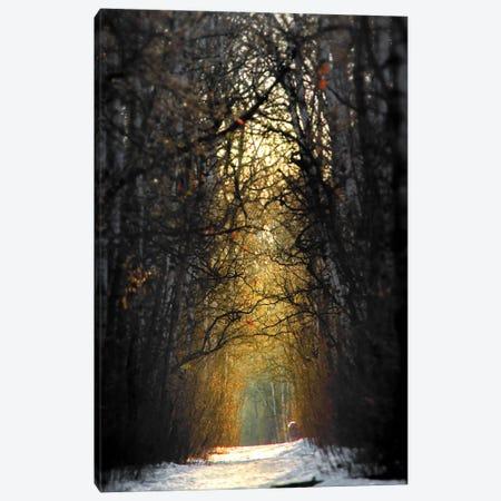 Birchwood Winter Alley Sunrise Canvas Print #NRV225} by Nik Rave Canvas Art Print