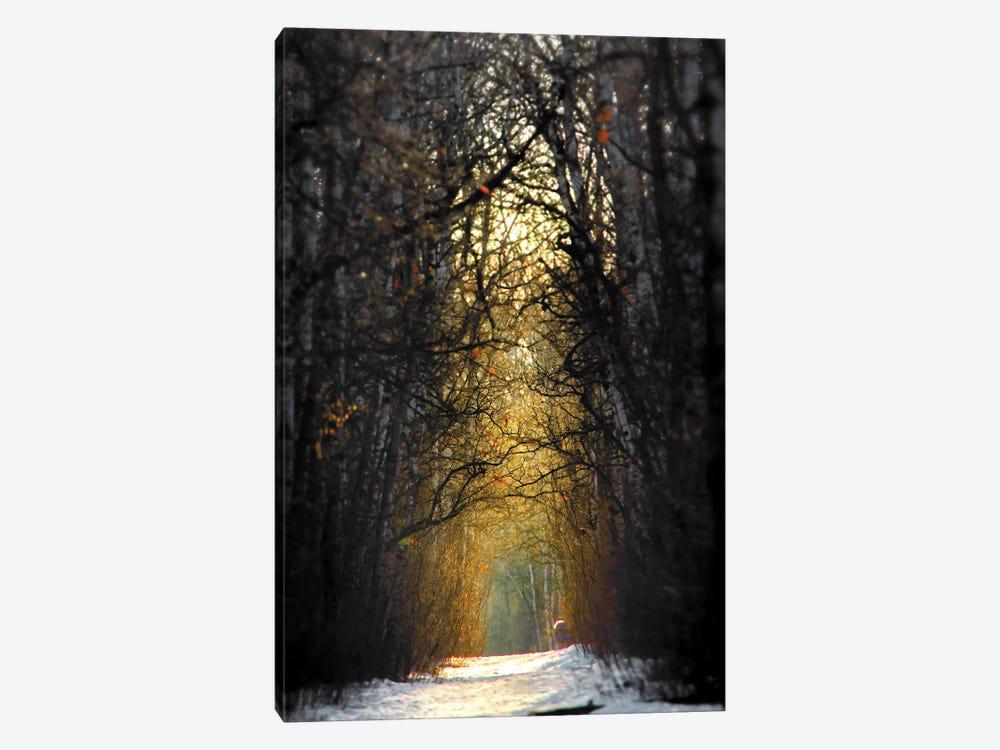 Birchwood Winter Alley Sunrise by Nik Rave 1-piece Canvas Wall Art