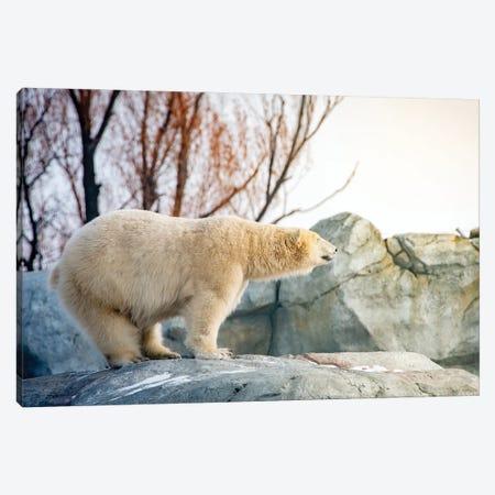 Polar Bear Enjoying The Sun Standing On The Rock Canvas Print #NRV226} by Nik Rave Art Print