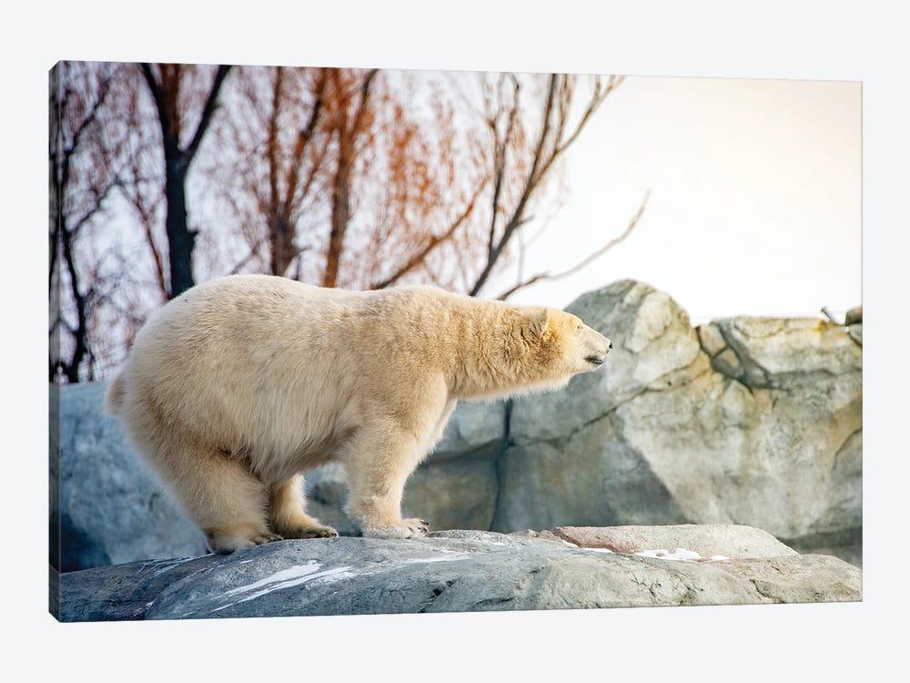 Polar Bear Enjoying The Sun Standing On The Rock by Nik Rave 1-piece Art Print