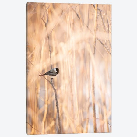 Bird On The Bench Surrounded By Tall Grass Canvas Print #NRV227} by Nik Rave Art Print