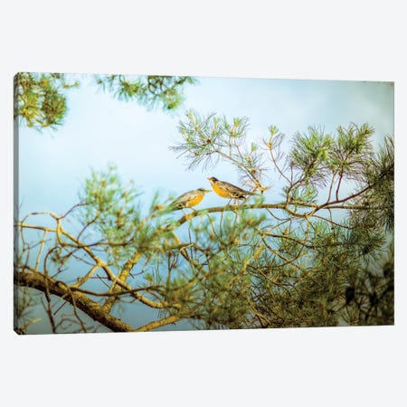 Birds Of Morning Song Canvas Print #NRV22} by Nik Rave Canvas Artwork
