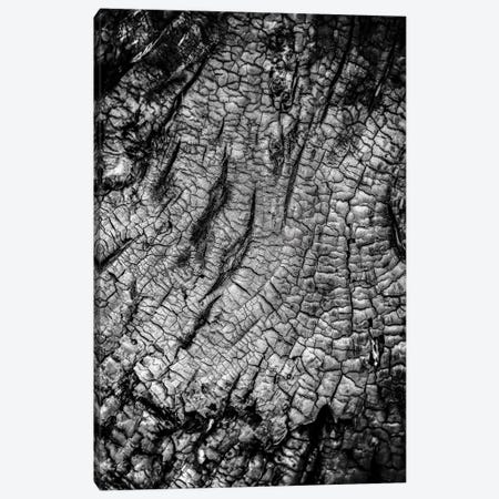 Burnt Out Tree Canvas Print #NRV231} by Nik Rave Canvas Print