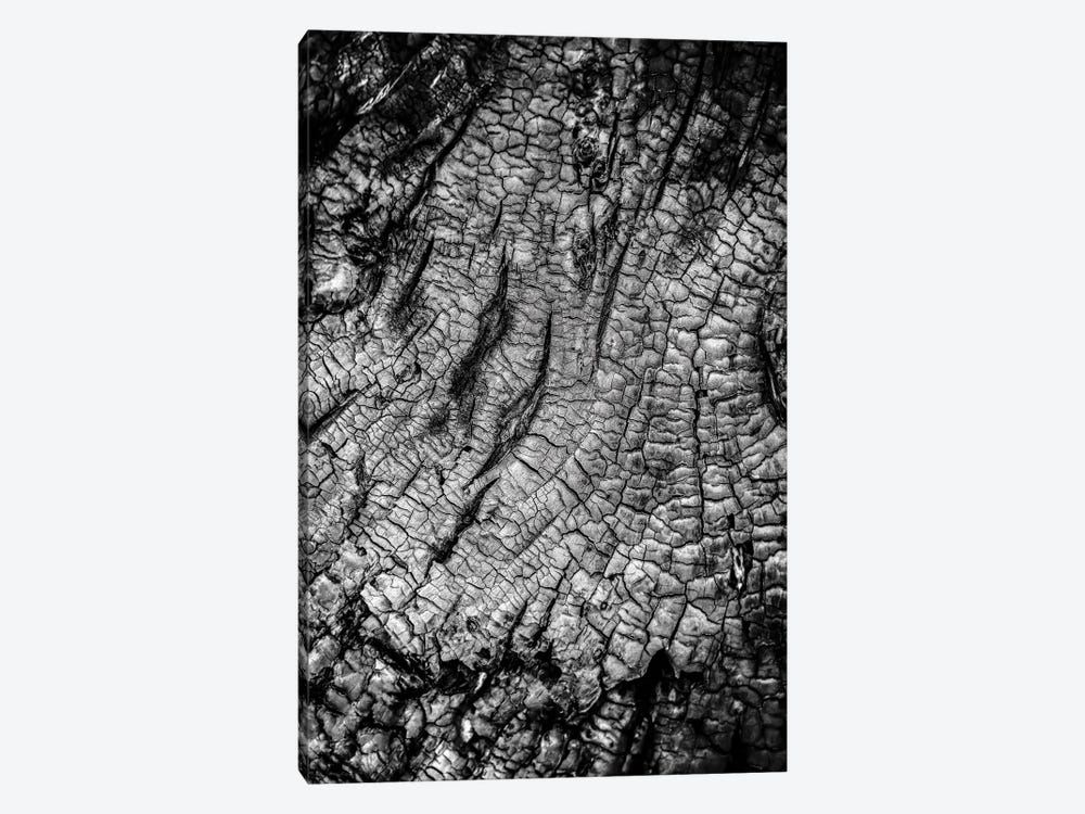 Burnt Out Tree by Nik Rave 1-piece Art Print