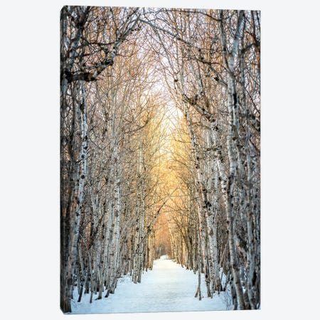 Birchwood Winter Alley Canvas Print #NRV232} by Nik Rave Art Print