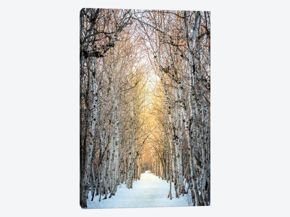 Birchwood Winter Alley by Nik Rave 1-piece Canvas Art