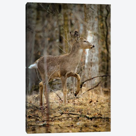 Baby Deer Walking Through The Forest Canvas Print #NRV233} by Nik Rave Canvas Art Print