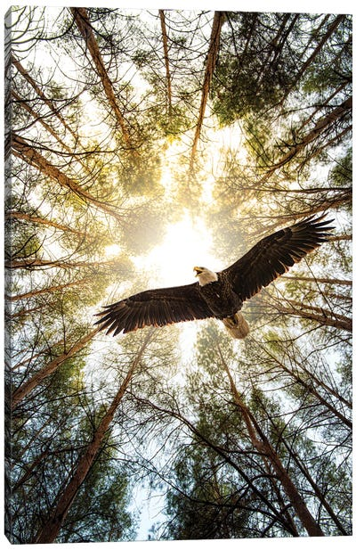 Master Of Heaven Bold Eagle Canvas Art Print