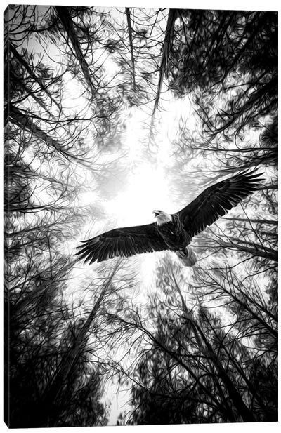 Master Of Heaven Bold Eagle B&W Canvas Art Print